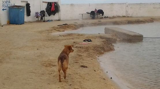Бродячие собаки на источнике на Арабатской стрелке